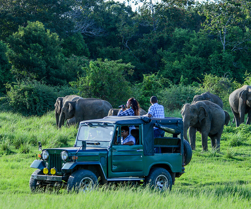 Tour Itineraries In Sri Lanka